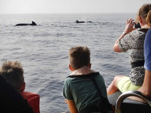 Wale vor La Palma: Fotografieren und Filmen in respektvollem Abstand. Foto: Ocean Explorer/Inia