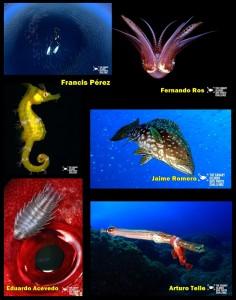 winner-dive-photo-challenge-canary-islands
