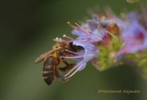 Fleißige Bienen auf La Palma: produzieren auch ausgezeichneten Honig, den man auf den Bauernmärkten rings um die Insel kaufen kann. Foto: Montserrat Alejandre