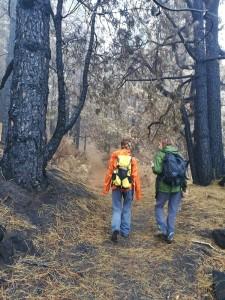 Die Vulkanroute im Bereich, wo der Waldbrand wütete: Ab Oktober wieder offen, und die Kiefern schlagen auch schon wieder aus. Foto: Cabildo