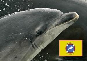 Delphine lächeln immer: Trotzdem freut es sie ganz besonders, wenn die Bootsbetreiber die Regeln der Kanarenregierung beachten. Foto: WDC