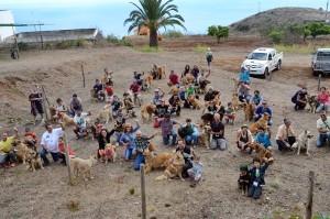 Guiness-Buch-Rekordversuch geglückt: 105 Garafíanos wurden von ihren Menschen nach Puntallana gebracht. Foto: