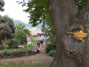 Finca La Castaña: hier gedeihen 188 Pilzarten, rechts im Bild der Schwefelporling. Foto: Rose Marie Dähncke