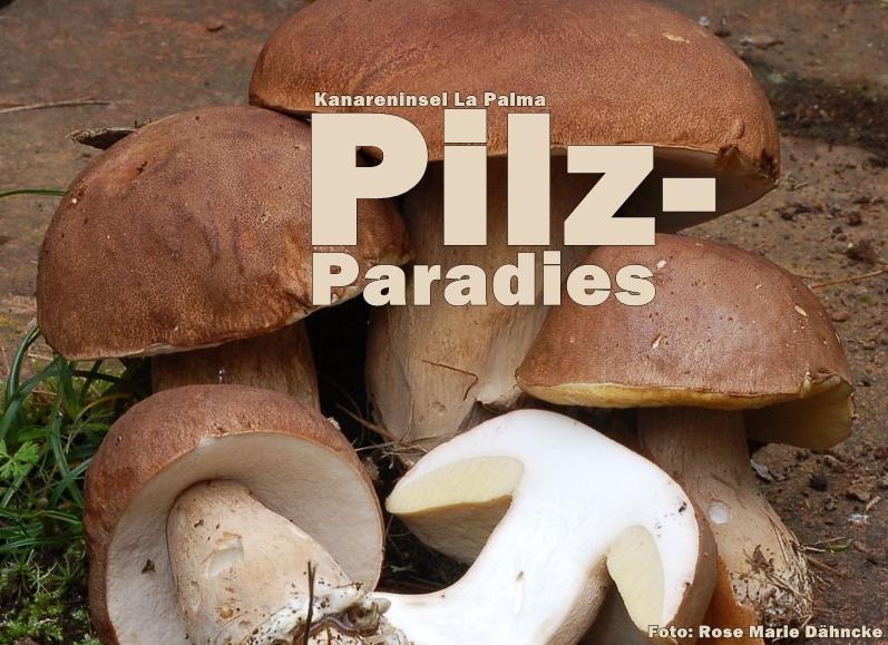 mushrooms la Palma-title