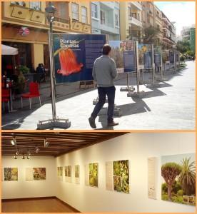 Doppelt: Die Fotoschau Pflanzen der Kanaren ist in der Fußgängerzone von Los Llanos und im Espacio Cultural der CajaCanarias in Santa Cruz zu sehen.