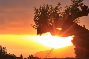 sunset-la-palma-drago-gudi