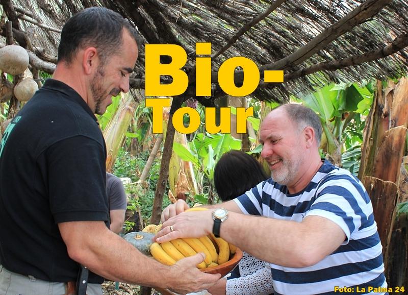 platanologico-puerto-naos-bananen5-titel