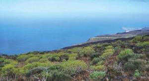 Naturschutzgebiet Tamanca: Los Llanos investiert. Foto: Biosfera de La Palma
