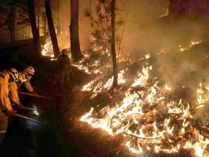 Waldbrand August 2016 auf La Palma: Jetzt gibt es EU-Mittel zur Prävention. Foto: BRIF