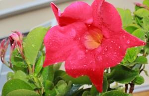 Der Regen muss sein: La Palma würde sonst nicht Isla Bonita heißen. Foto: La Palma 24