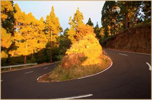 Die LP-4 zum Roque de Los Muchachos: der Belag ist nicht schlecht, aber es gibt unzählige enge Kurven und die Straße ist sehr schmal. Foto: Obras Públicas La Palma