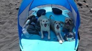 Hunde am neuen Strand von Santa Cruz de La Palma? Der städtisdche Erlass verbietet sie - eine Petition will einen Bereich für die Vierbeiner erzielen.