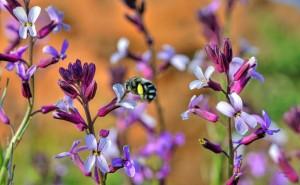 encantos-de-primavera-facundo-biene