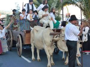 Authentisch: Der Umzug mit Ochsenwagen am