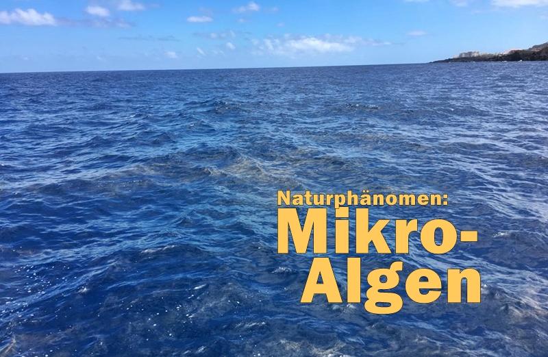 mikroalgen-santa-cruz-de-la-palma