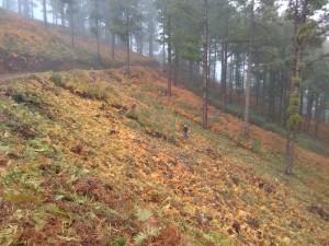 Aufräumarbeiten im Wald: So beugt das Cabildo auch Waldbränden vor.