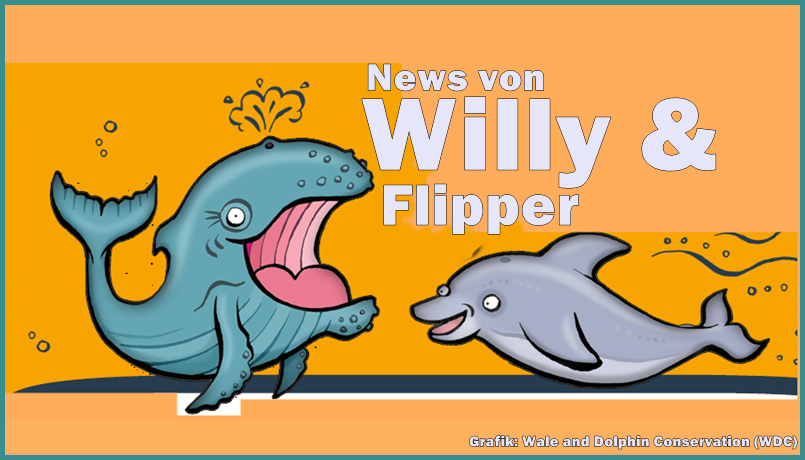 Wal-delfin-wdc-titel
