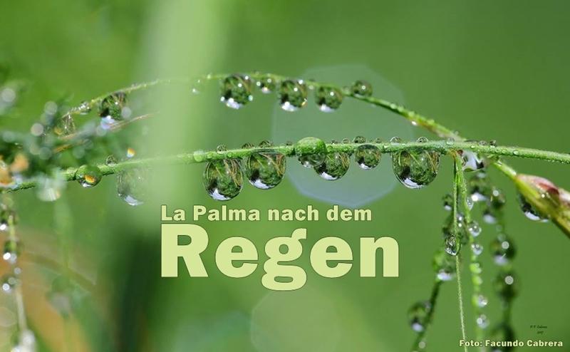 nach-dem-regen-facundo2