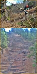 Waldbrand-Vorbeugung: Trockenes Unterholz, insbesondere in den Feuerschneisen, muss beseitigt werden. Fotos: Cabildo