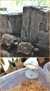 """Schildkröten im Maro Parque: Auch hier wird der Nachwuchs im """"Kindergarten"""" betreut. Fotos: La Palma 24"""