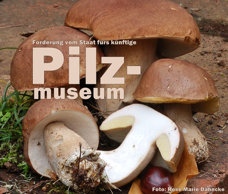 pilz-museum-la-palma-titel