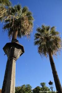 Palmen auf den Kanaren gezählt: La Palma auf dem vorletzten Platz. Foto: Fernando Rodríguez