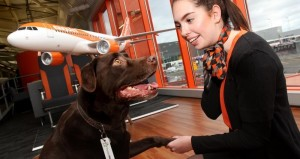 EasyJet: Tierbetreuungsidee für Fluggäste in Planung. Pressefoto EasyJet