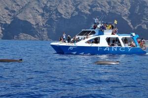 Die Fancy 2: Das Ausflugsboot sichtet und dokumentiert die Sichtungen von Cetaceen auf den Kanaren. Foto: Fancy 2