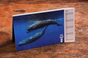 WDC-Postkartenkalender: schöne Fotos zum Versenden.