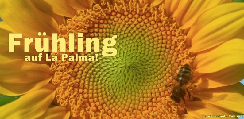 fruheling-la-palma-facundo-cabrera-foto-1120