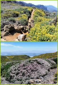 Roque de Los Muchachos im Mai/Juni: alles blüht! Fotos: Graja-Tours