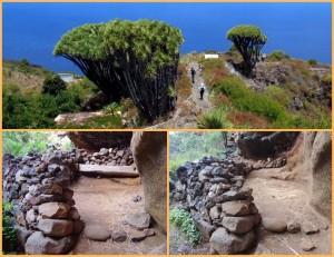 Der beliebte Wanderweg entlang der Drachenbäume in Buracas: