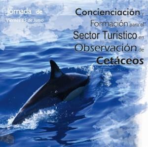 Neu: Bewusstsein für Wale und Delfine soll verschärft werden.