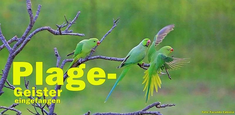 papageien-facundo-cabrera-foto-800