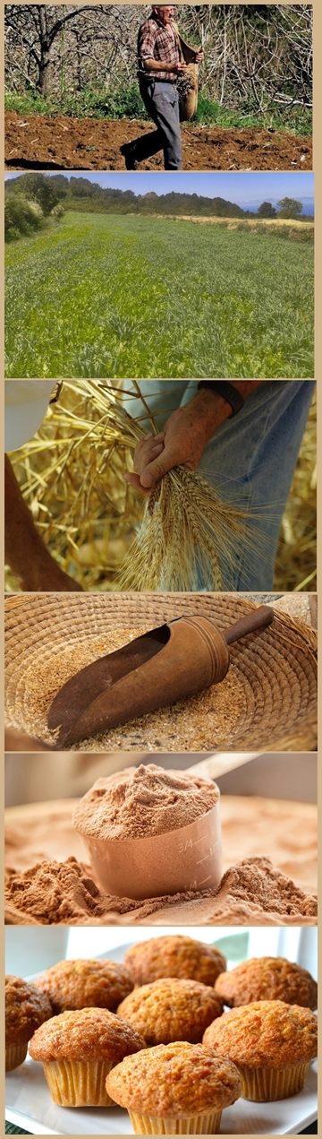 Gofio: Das Mehl der Kanaren, das aus geröstetem Getreide, manchmal auch durch Hülsenfrüchte ergänzt.