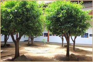 inselmuseum-la-palma-organenbaeume2