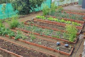 96-stündiger Kurs in Mazo: gelehrt wird ökologischer Gartenbau.