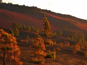 Höhenlagen auf La Palma: Alles ist staubtrocken und die Waldbrandgefahr extrem hoch. Foto: Visit La Palma