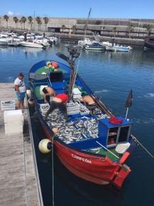 """Bei Stürmen entkommen die Seebarsche manchmal aus den Fischzuchten: Fischer entdecken die """"Flüchtlinge"""" bei ihrer Arbeit. Foto: Fischer Tazacorte"""