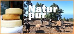 Ziegenkäse aus La Palma: wird streng kontrolliert.