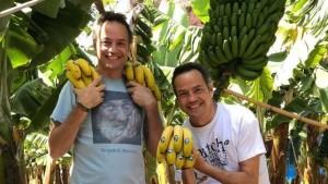 Plátanos de Canarias: Die Bananen von den Kanaren werden auch von