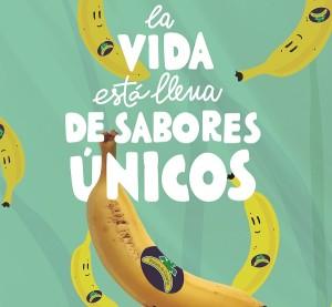 Bananen heißen auf den Kanaren Plátanos: Jetzt läuft eine Studie, die darauf hinweist, dass sie ihren Kollegen aus Südamerika einiges voraus haben. Foto: ASPROCAN