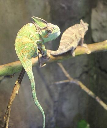 Exotische Tiere niemals aussetzen, sondern abgeben: Im Maro Parque finden sie ein neues Zuhause. Foto: La Palma 24