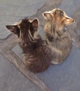 Wer passt auf Haus und Tiere auf, wenn La Palma-Residenten mal verreisen? Brigitte hat eine Idee. Foto: La Palma 24