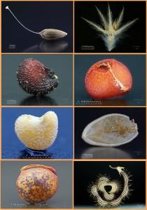 Pflanzensamen aus dem Atlas Digital de Semillas - Teil 2: wahre Schönheiten! Fotos: Facundo Cabrera