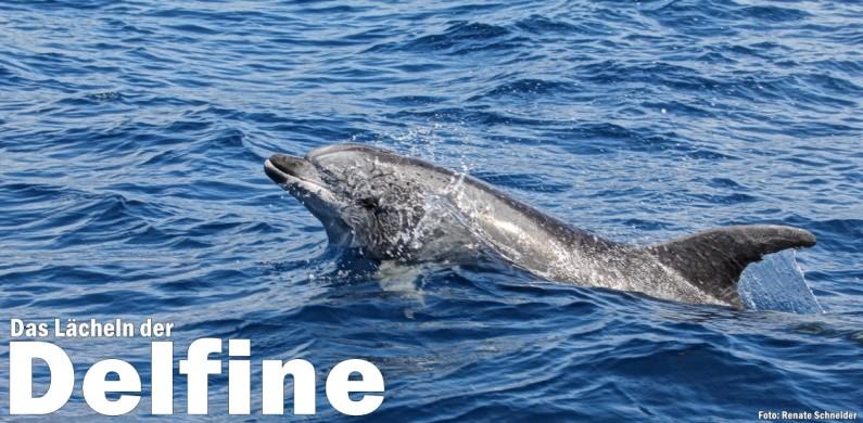 Renate-máquina-delfines-1120 del título
