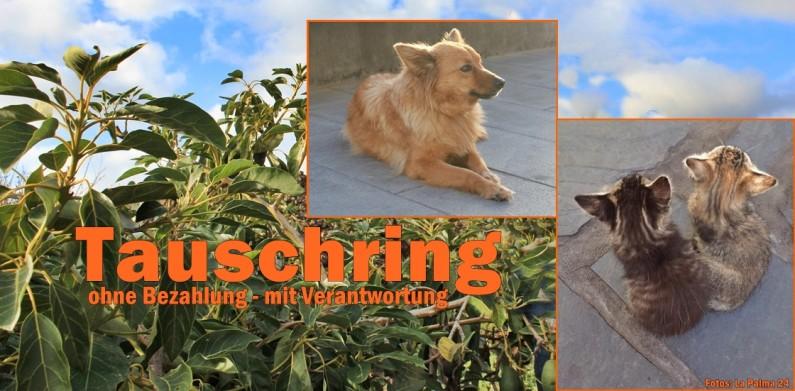 tauschring-haus-garten-la-palma-titel-1120