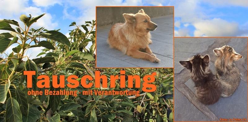 tauschring-haus-garten-la-palma-titel-800