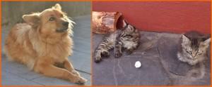 Keine Sorge um die Daheimgebliebenen: Tierehüten gehört auch zu den Aufgaben der Tauschring-Mitglieder. Fotos: La Palma 24