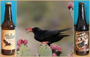 Die beiden jüngsten Kinder von Gino: Das Isla Verde Natural Craft Pilsen und La Graja Pirípi, deren Etikett die nur auf La Palma lebende Krähenart namens Graja ziert.
